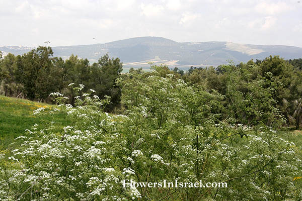 wildflowers in Israel, Flowers of the Holy Land