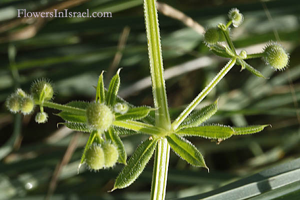Flora of Israel online, Native plants, Nature