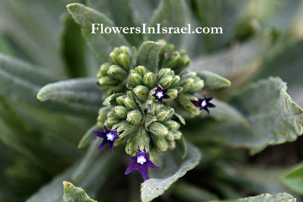 Flora, Israel, send flowers online